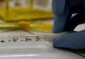 Entre la semana epidemiológica 31 y la 34, se registraron 3.291 casos y en el 75 % de las muestras procesadas se detectó virus del dengue de los serotipos D1 y D3, transmitido por el mosquito 'Aedes aegypti', que también contagia el chikunguña, el zika y la fiebre amarilla.