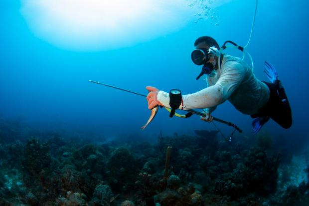 Estudio busca concientizar sobre prácticas de pesca sostenible