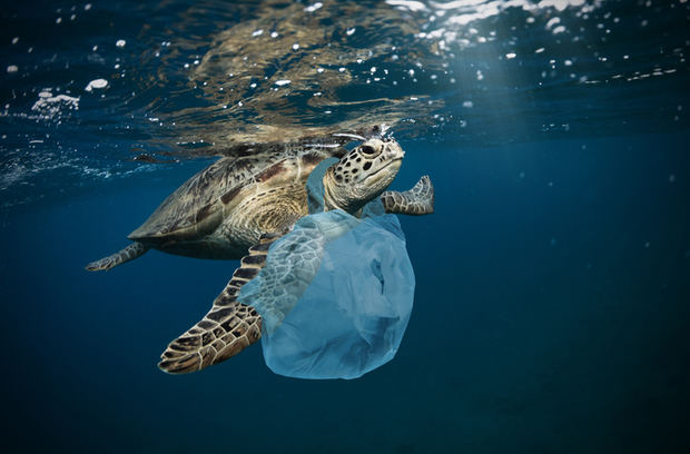 Galápagos, un tesoro natural en lucha contra los microplásticos