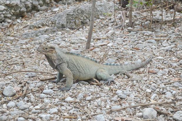 Plan de Acción para la Biodiversidad de CEMEX Dominicana recibe reconocimiento internacional