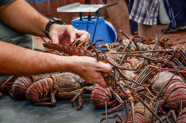 R.Dominicana anuncia veda para la pesca de langostas a partir del 1 de marzo.