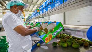 El presidente Danilo Medina cumplió el compromiso asumido durante una Visita Sorpresa a productores de mango de la provincia Peravia, al entregar hoy una moderna planta de empaque y tratamiento hidrotérmico.