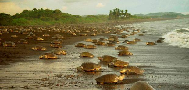 Ambientalistas denuncian que una carretera dañará santuario de tortuga marina