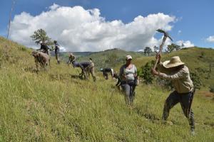 Reforestación de zonas agrícolas