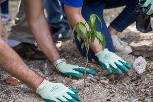 CEPM siembra 400 árboles de Cotoperí, un árbol de sombra que está en la lista roja del Jardín Botánico Nacional.