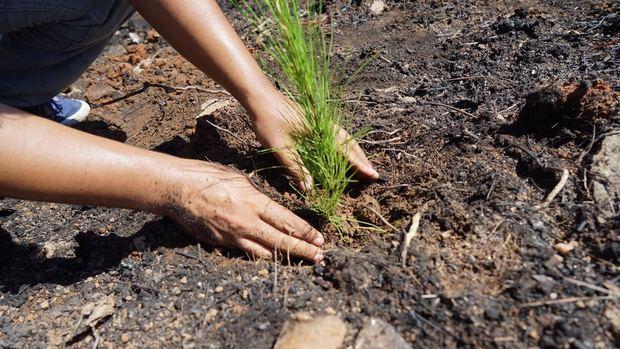 Industrias San Miguel siembra más de 12 mil árboles en Santiago Rodríguez
