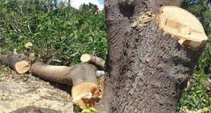 Activan plan contra incendios forestales y para evitar la tala de árboles