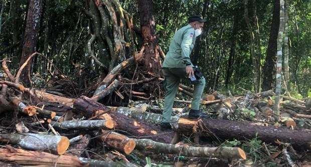 Arrestan a varias personas por tala de árboles en Jarabacoa