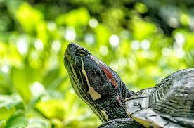 Día mundial de las Tortugas Marinas: exijamos respeto por sus vidas