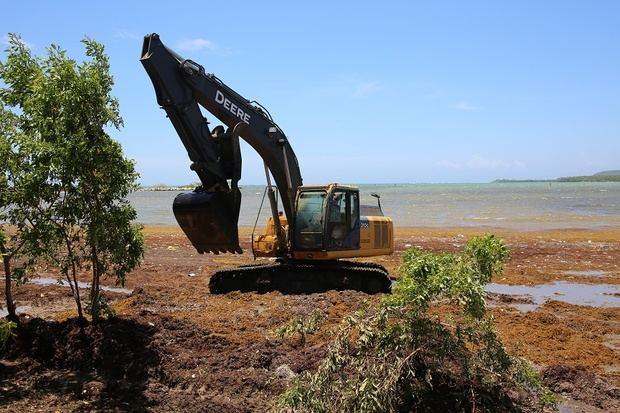 Minera Belfond apoyó operativo de retiro del sargazo en la playa Casita Blanca