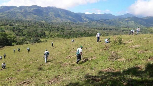 Cientos de voluntarios se suman a jornadas de reforestación en todo el país