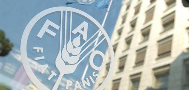 FAO: los precios de los alimentos podrían caer más en 2019 por débil demanda