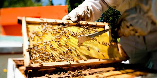 Escasea la miel de abejas de producción nacional por aumento en el consumo.