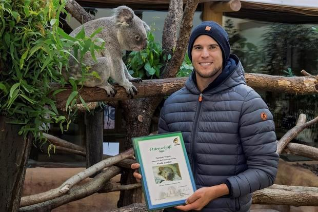 Dominic Thiem -la tercera raqueta del mundo- ha apadrinado a la primera cría de koala del zoo de Schönbrunn, en Viena, que nació el día después de su victoria en el Abierto de Estados Unidos el pasado mes de septiembre. En la imagen se ve al tenista junto al documento del apadrinamiento y al padre del pequeño koala.