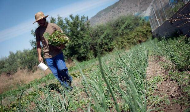 Los agricultores tienen un rol clave en el desarrollo del territorio ya que generan empleo, son fuente de diversos alimentos para el mercado interno y frenan la migración a la ciudad.