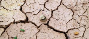 Temen que el clima de la Tierra pueda volver a ser el mismo de hace 50 millones de años