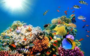 Se denomina arrecife de coral a la estructura encontrada en el área marina compuesta por corales. Es uno de los ecosistemas más ricos en diversidad de especies marinas del mundo.