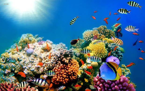 Bayahibe 10k estará dedicada a la conservación de los arrecifes de coral