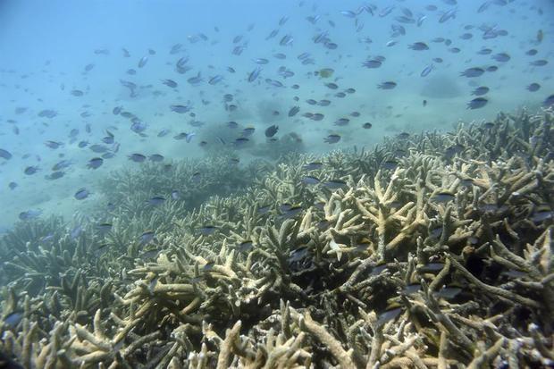 Descubren un nuevo arrecife de coral en Australia, el primero en 120 años