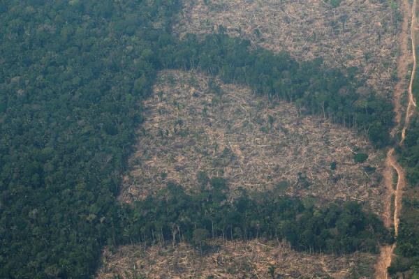 Cobertura forestal de la Amazonía a partir del análisis de imágenes de satélite.