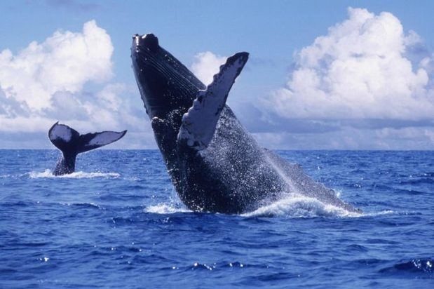Arranca la temporada de ballenas 2021 con las regulaciones por COVID-19.