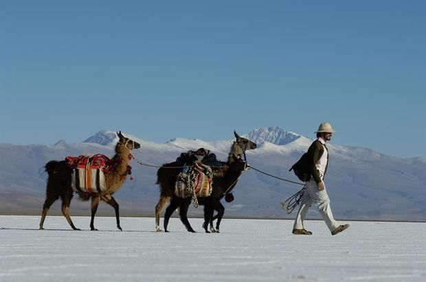 Caravana de llamas por Zoom y venta futura: el turismo argentino se reinventa