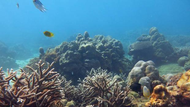 Los corales necesitan una década para recuperarse del blanqueo, según estudio