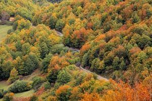 Algunos países, especialmente China e India, ya han lanzado con éxito algunos esfuerzos de plantación de árboles a gran escala.