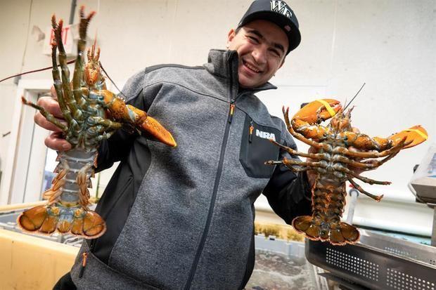 """El pescador dominicano Juan Peralta muestra langostas en el área de pesado y selección de la cooperativa de pesca """"Yankee Fishermen"""" (Pescadores Yankees) el 8 de febrero de 2020 en la ciudad de Seabrook, New Hampshire (Estados Unidos)."""