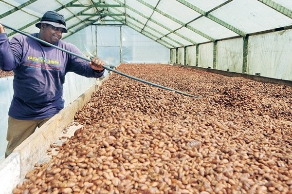 El país produce 80.000 toneladas de cacao que generan 225 millones de dólares