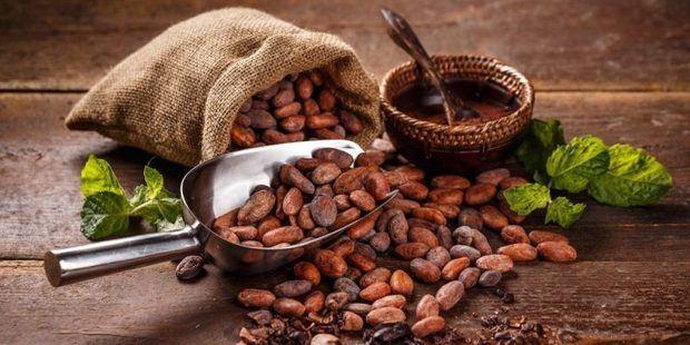 República Dominicana exportó 73,000 toneladas de cacao durante la temporada 2018 - 2019