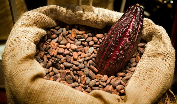 Humberto Estaba: Propone elevar el Cacao a