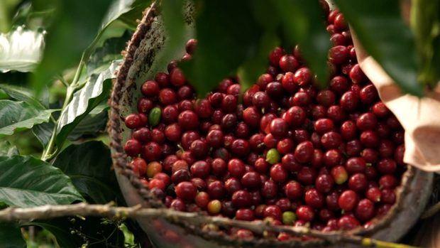 Centroamérica busca fortalecer el trabajo conjunto de sus países para encontrar soluciones que le permita enfrentar los problemas que afectan al sector cafetalero.