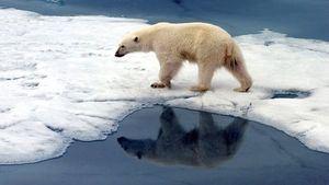 «cambio climático», claves para una buena redacción.