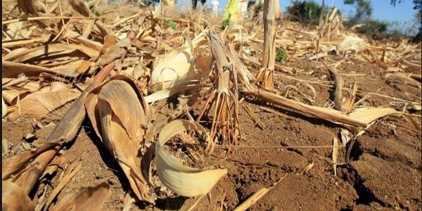 Proyecto busca reforestar Corredor Seco de América Central y áreas de RD