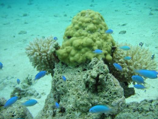 La 'receta' para revertir la acidificación del Océano consiste en avanzar hacia modelos de energía sostenible.
