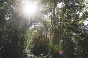Vista de archivo de un bosque en una reserva natural ubicada en el centro de Costa Rica.