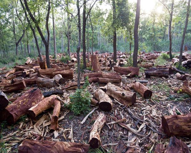 Medio Ambiente y PNUD identificarán áreas ricas en biodiversidad amenazadas