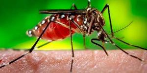 Agente transmisor del dengue