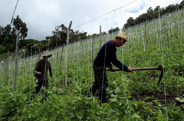El Covid-19 puede ser devastador para el empleo rural de Latinoamérica, dice la OIT