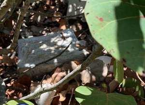 Autoridades hallan 333 paquetes de droga ocultos en unos matorrales en Nigua.