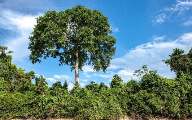 La promoción de la economía verde concilia el desarrollo del medio ambiente y la reducción de la pobreza.
