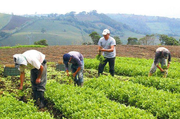 IAD dice política estatal fortalece y recupera la Agropecuaria