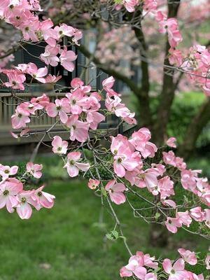 Flores de mayo.