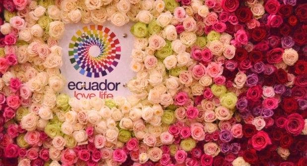 Unas 15.000 toneladas de flores saldrán desde Quito por San Valentín
