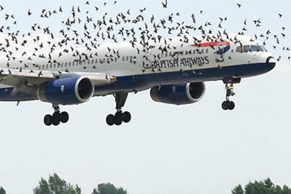 Aves cerca de avión en pleno vuelo