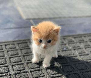 Día Internacional del Gato: trabajar con mininos incrementa la productividad y reduce el estrés, según informe.