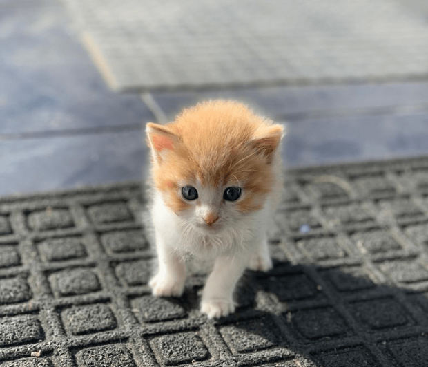 Día Internacional del Gato: trabajar con mininos incrementa la productividad y reduce el estrés