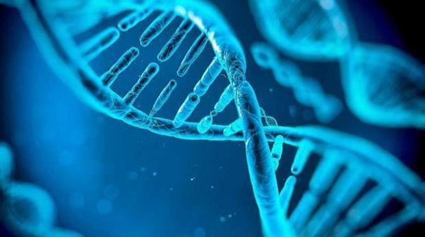 """El """"contexto celular"""", un aspecto clave para la formación del cáncer"""