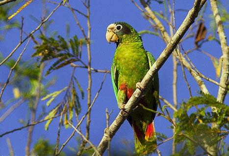 El impacto del COVID-19 ha mejorado la calidad ambiental en República Dominicana
